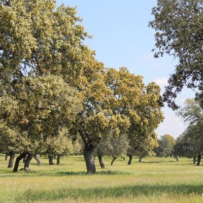 Quesos Fuente la Sierra - En los Pedroches